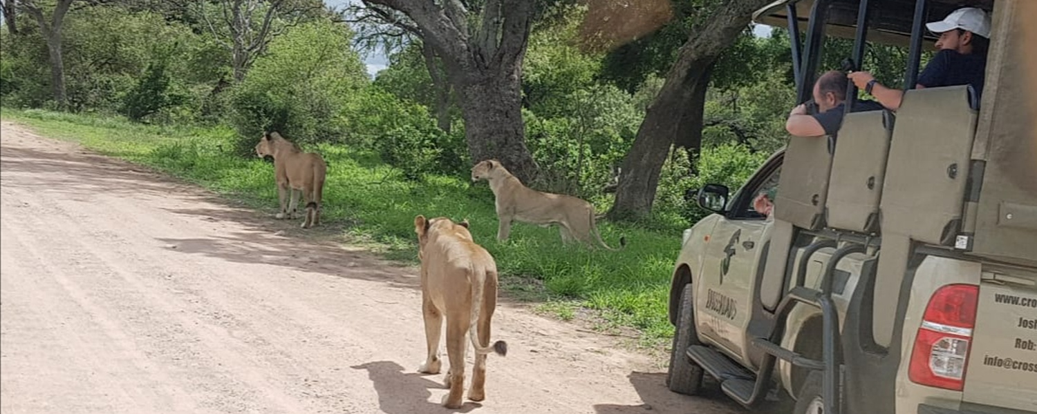 Open Air Safari Game Drives,Big 5 Reserves. Day Trips to Kruger National Park